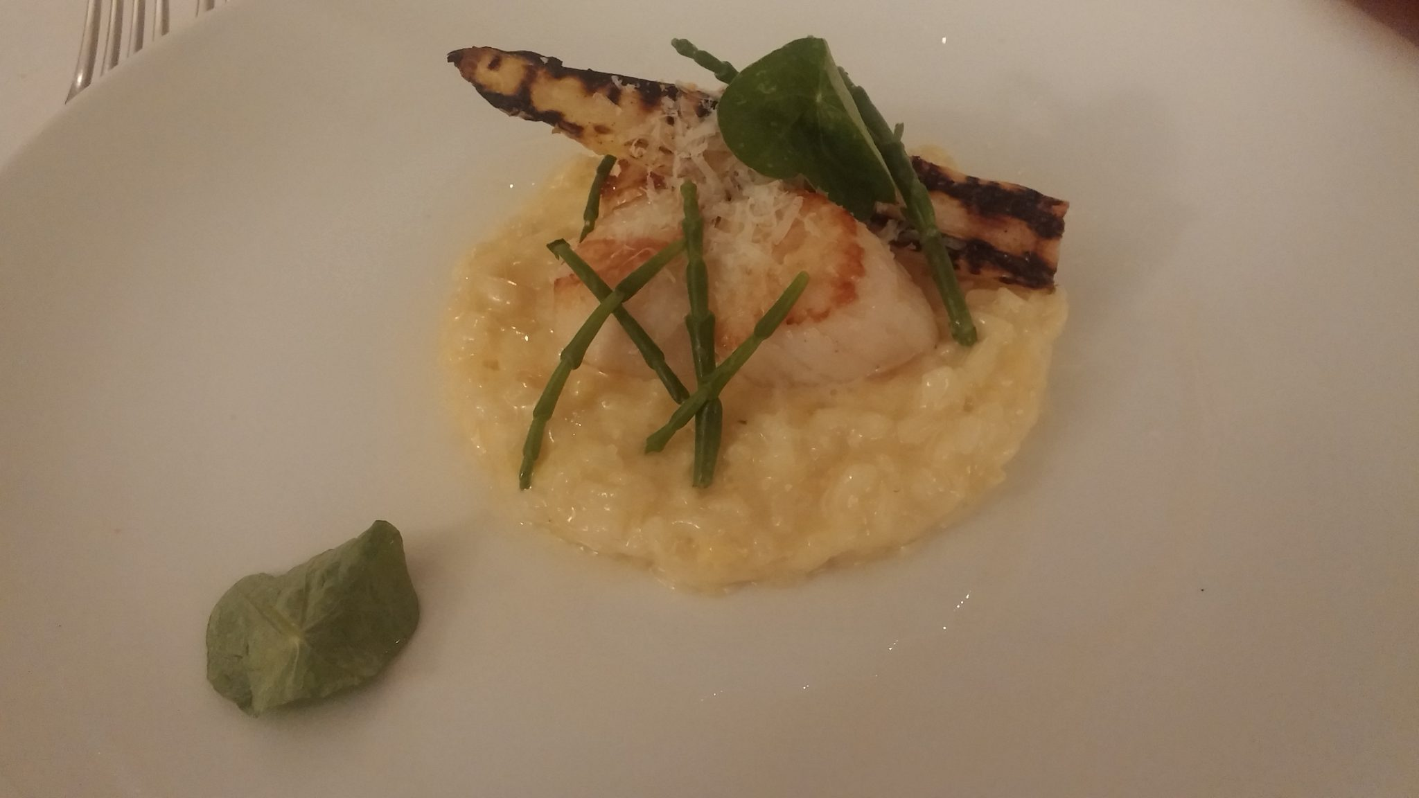 Scallop, White Chocolate Risotto