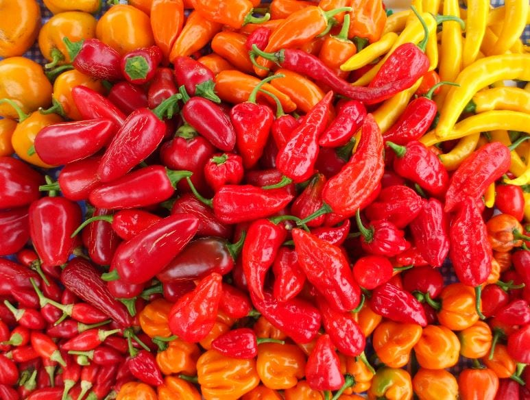 CHRISTMAS CHILLI FIESTA COMES TO DERBY